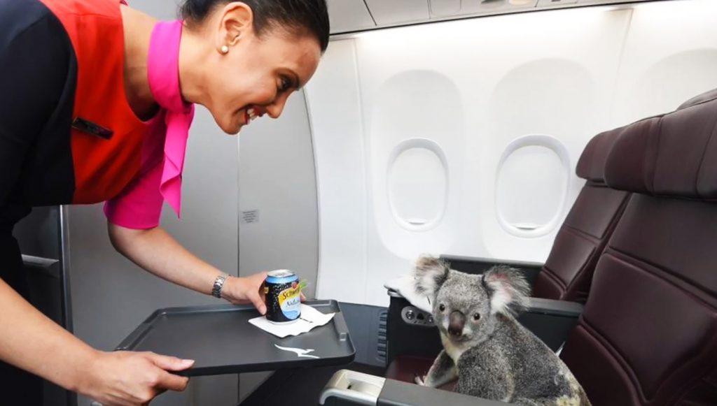 koala_newrelic